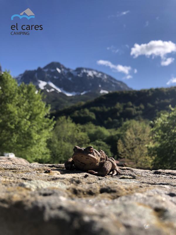 camping el cares montaña Picos de europa