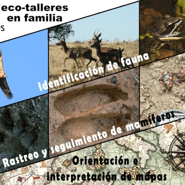 Talleres de naturaleza en Picos de Europa, ECO-turismo en familia