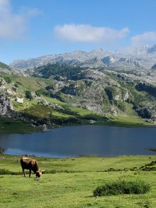 The Covadonga and Santina lakes: everything there is to see and do.