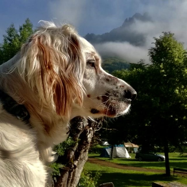 Camping with your dog. Tips for a dream holiday.